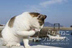 さなぎねこ写真集:猫の写真集で多度津町の町おこし!—FAAVO